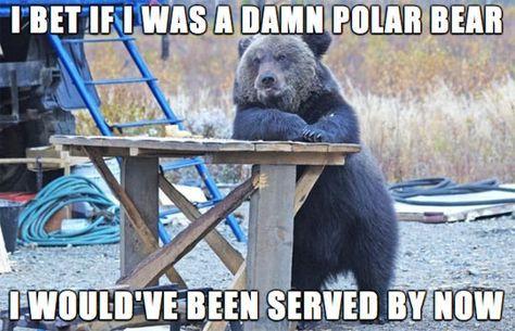 9010f2892c836012ef7a35d1fe3e0ab3--funny-bears-black-bear.jpg