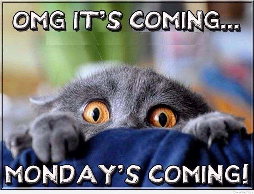 Monday OMG.jpg