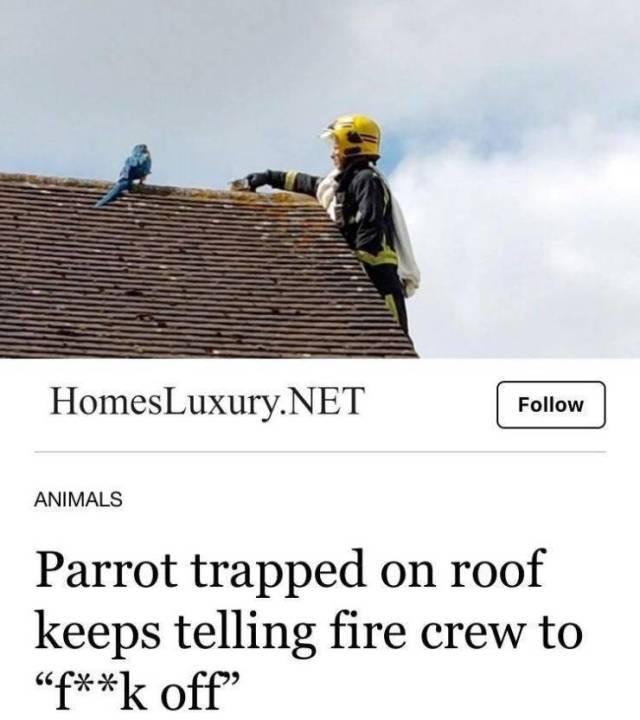 no-thats-not-my-parrot.jpg