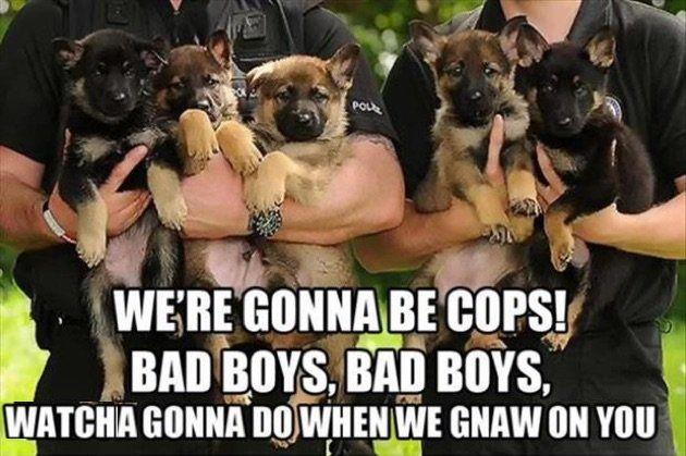 police-Memes1.jpg