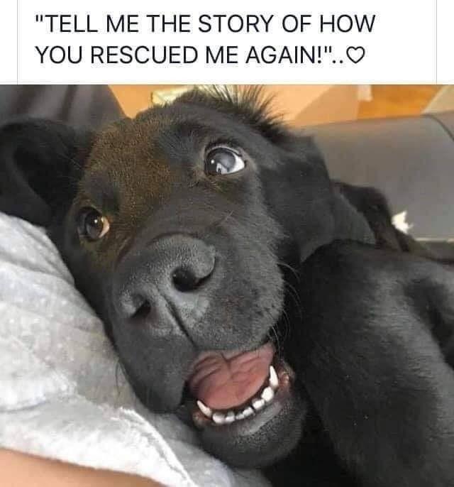 Rescue Again.jpg