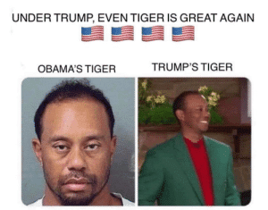 thumb_under-trump-even-tiger-is-great-again-obamas-tiger-trumps-48369829.png