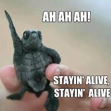 turtle 001.jpeg